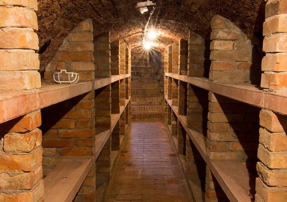 Vinný sklípek s ubytováním – jižní Morava